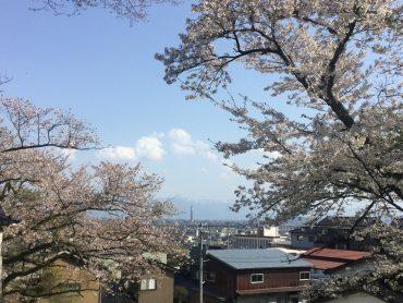城山公園ーソメイヨシノーtags[富山県]