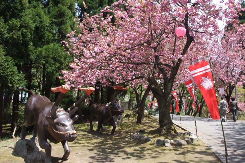 倶利迦羅さん八重桜まつり