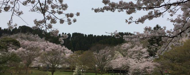 城山お花見まつり